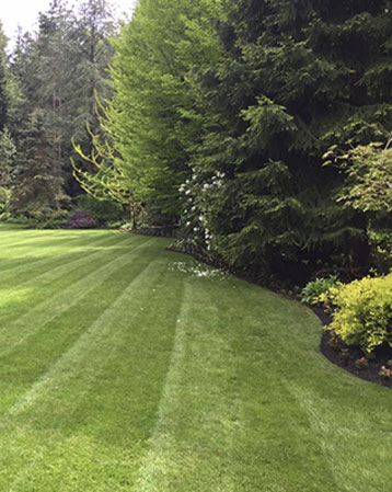 Landscape Installation, Lawn care, Mowing